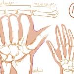 mains 14