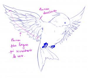 ailes oiseaux