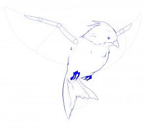 ailes sque oiseau