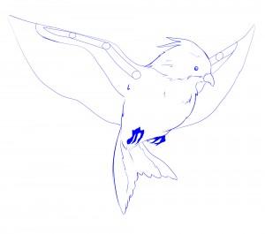 ailes structu oiseau