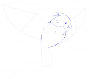 corps oiseaux