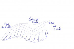 structure bras